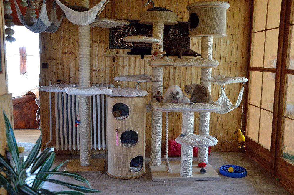 Výsledek obrázku pro kočičí stromy
